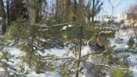 Chica joven que se divierte con las bolas de nieve en parque almacen de video