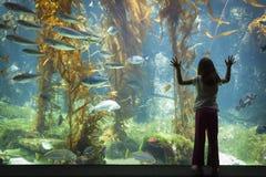 Chica joven que se opone contra el vidrio grande de la observación del acuario Foto de archivo libre de regalías