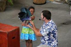 Chica joven que sostiene el pájaro exótico durante la demostración viva, isla de la selva, Miami, 2014 Imágenes de archivo libres de regalías