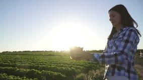 Chica joven que sostiene la caja plástica llena de fresa contra el sol, cámara lenta almacen de video