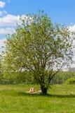 Chica joven que toma el sol en un parque de la ciudad debajo de manzano Fotografía de archivo