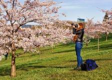 Chica joven que toma las fotos en Sakura o el jardín del cerezo Imagen de archivo libre de regalías