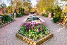 Chicago Botanic Garden. Flowers in the Chicago botanic garden Stock Image