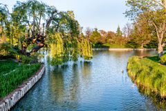 Chicago Botanic Garden. Lake and trees at the Chicago Botanic Garden royalty free stock image
