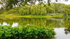 Chicago botanisk trädgårdlandskap arkivbild
