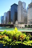 Chicago buildings and river Stock Images