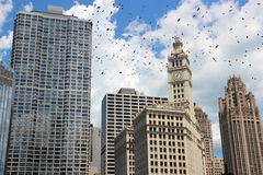 Chicago city. Chicago, Illinois in the United States. City skyline. Ominous birds royalty free stock photos
