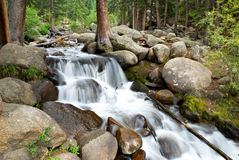Chicago Creek Cascade. Along the highway to Mt. Evans, Colorado Royalty Free Stock Photography