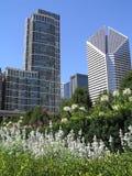 Chicago del centro dalla sosta di millennio Immagine Stock Libera da Diritti