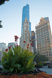 Chicago: flowers, Wrigley building and Trump tower on September 22, 2014 Stock Photography