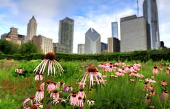 Chicago horisont från Lurie Garden arkivbild