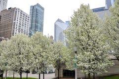 CHICAGO, IL - 5 maggio 2011 - alberi in fiore pieno durante la stagione primaverile nel millennio parcheggia Immagini Stock Libere da Diritti