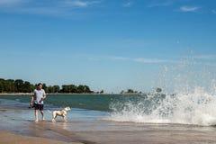 9/6/2014 Chicago - man som går hunden på Lakeshore Fotografering för Bildbyråer