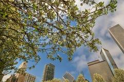 Chicago och körsbärsröd blomning Fotografering för Bildbyråer