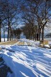 chicago olivgrönpark Arkivbild