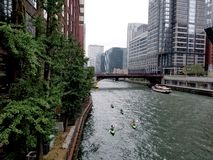 Chicago river with kayakers royalty free stock image