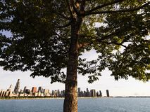 Chicago skyline. Tree with Lake Michigan and Chicago skyline in background Stock Photos