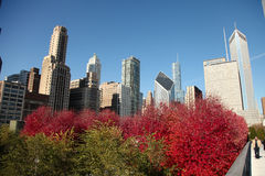 Chicago Skyline during Fall Stock Photo