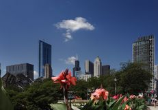 Chicago skyline flowers. The Chicago skyline with flowers and greenery in the foreground Royalty Free Stock Image