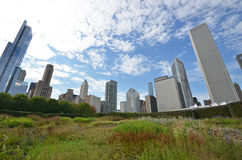 Chicago skyline grant park Royalty Free Stock Images