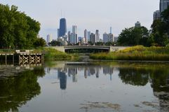 Chicago Skyline with Nature