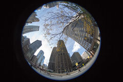 Chicago Skyscrapers in Fisheye. Buildings in Chicago in the autumn Royalty Free Stock Image
