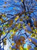 Chicago snöträd Royaltyfri Bild
