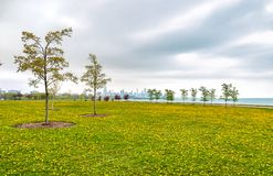 Chicago south lake shore, spring landscape of green field with yellow flowers, and trees. Royalty Free Stock Photography