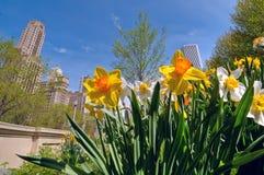 Chicago in springtime stock photos