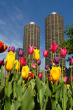 Chicago in Spring Stock Photos