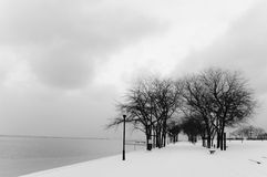 Chicago Winter. Snowy winter trees b y the Navy Pier in Downtown Chicago Stock Images