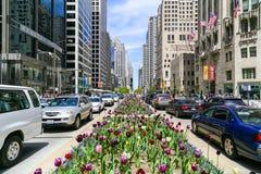 chicago wiosna Zdjęcie Stock