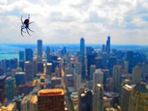 Chicagoan Spider Stock Photography