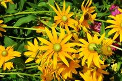 Chicagowski Ogród Botaniczny zdjęcia royalty free