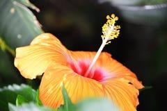 Chicagowski Ogród Botaniczny zdjęcia stock