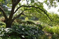 Chicagowski ogród botaniczny, Illinois, U S A Fotografia Stock