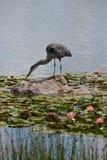 Chicagowski ogród botaniczny, Illinois, U S A obraz royalty free