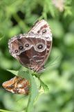 Chicagowski ogród botaniczny, Illinois, U S A fotografia royalty free