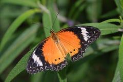 Chicagowski ogród botaniczny, Illinois, U S A obrazy royalty free