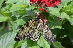 Chicagowski ogród botaniczny, Illinois, U S A zdjęcia stock
