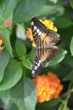 Chicagowski ogród botaniczny, Illinois, U S A Zdjęcie Stock