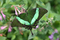 Chicagowski ogród botaniczny, Illinois, U S A zdjęcie royalty free