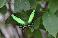 Chicagowski ogród botaniczny, Illinois, U S A zdjęcia royalty free