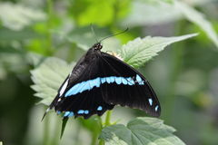 Chicagowski ogród botaniczny, Illinois, U S A Obrazy Stock