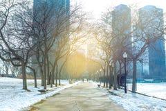 Chicagowski w centrum jawny park obraz royalty free