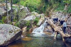 Chicas jóvenes con un perro de la aventura en el río con la cascada y un tronco de árbol caido dentro del agua imagen de archivo
