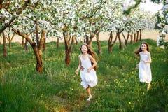 Chicas jóvenes hermosas en los vestidos blancos en el jardín con los manzanos blosoming en la puesta del sol Abrazo de dos amigos fotografía de archivo libre de regalías