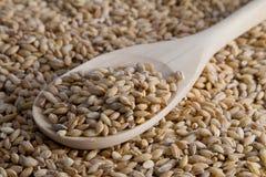 Chicchi del grano Fotografie Stock