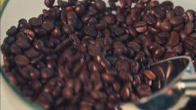 Chicchi di caffè archivi video