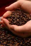 Chicchi di caffè Aromoa Fotografie Stock Libere da Diritti